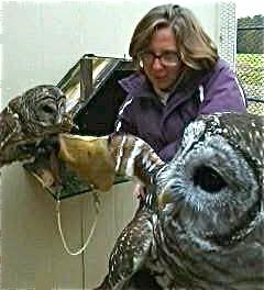 Bess Owls