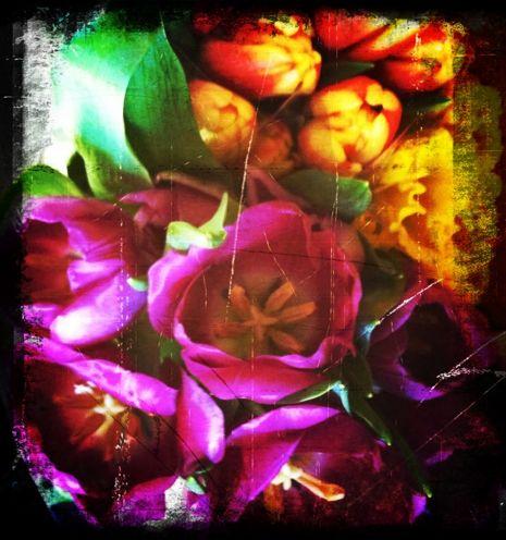 Susan's Flowers Diana Trout