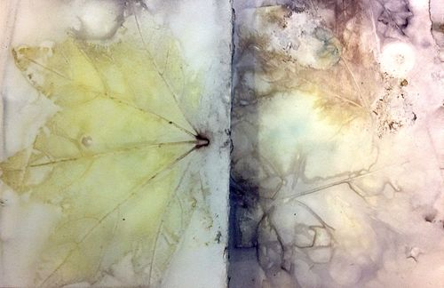 Another Windfall Paper, Diana Trout