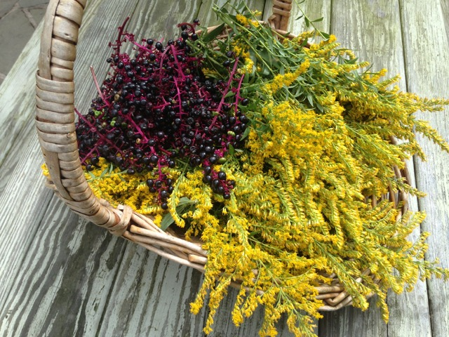 Pokeberry & Goldenrod