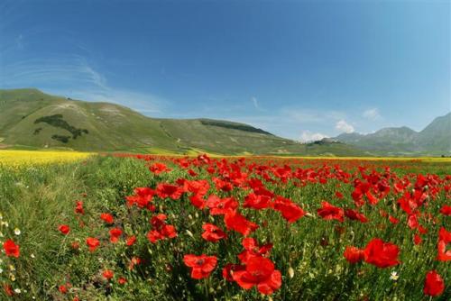 Casteluccio Flowers 2